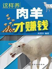 这样养肉羊才赚钱