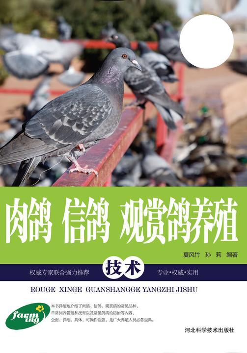 肉鸽 信鸽 观赏鸽养殖技术