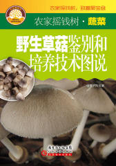 野生草菇鉴别和培养技术图说