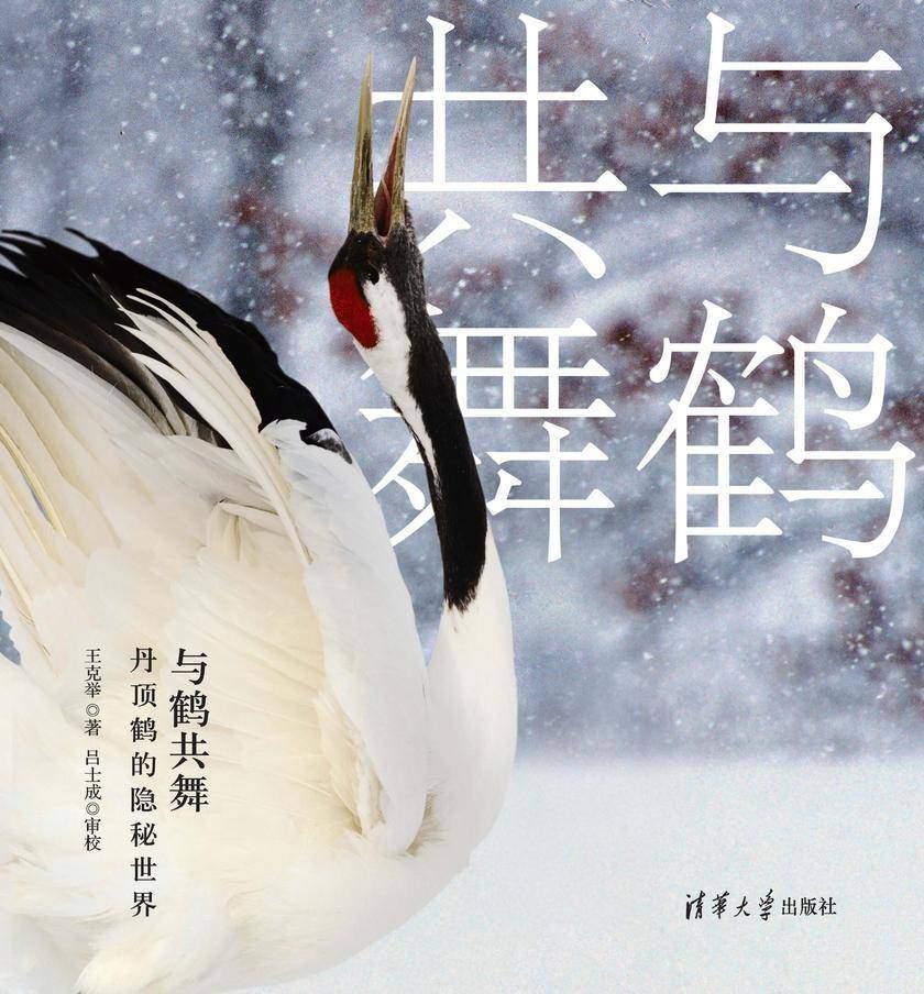 与鹤共舞:鹤的隐秘世界