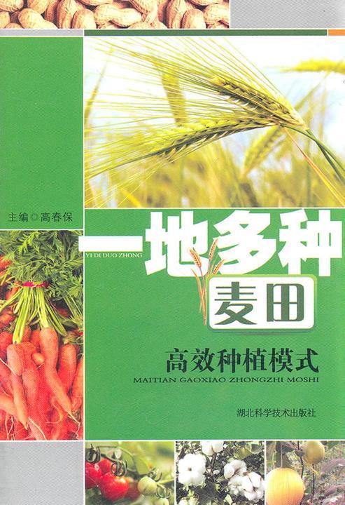 一地多种麦田高效种植模式