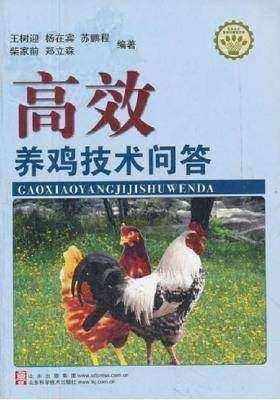高效养鸡技术问答