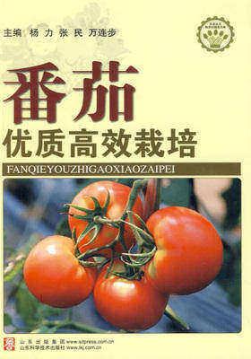 番茄优质高效栽培