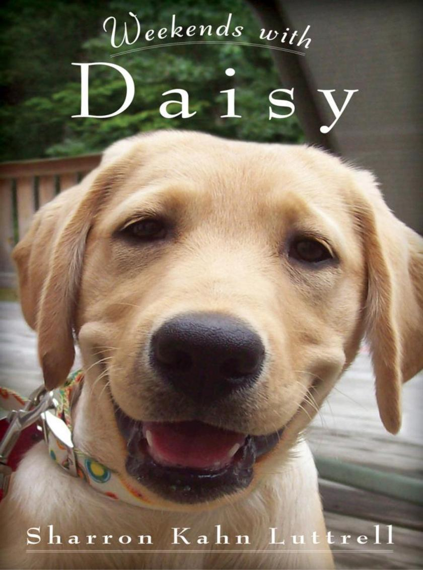 Weekends with Daisy